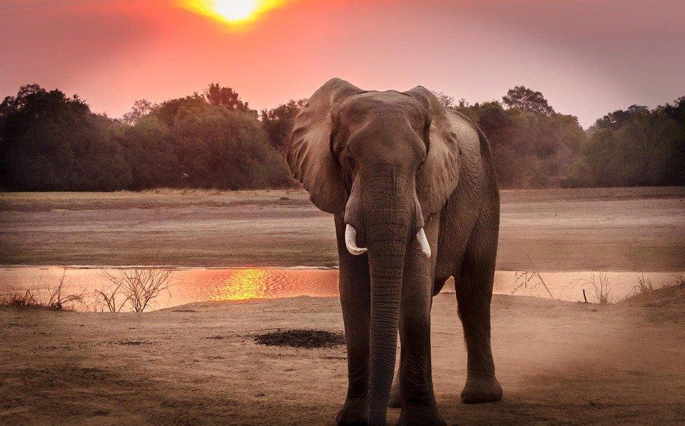 beautiful-dawn-elephant-1054655.jpg