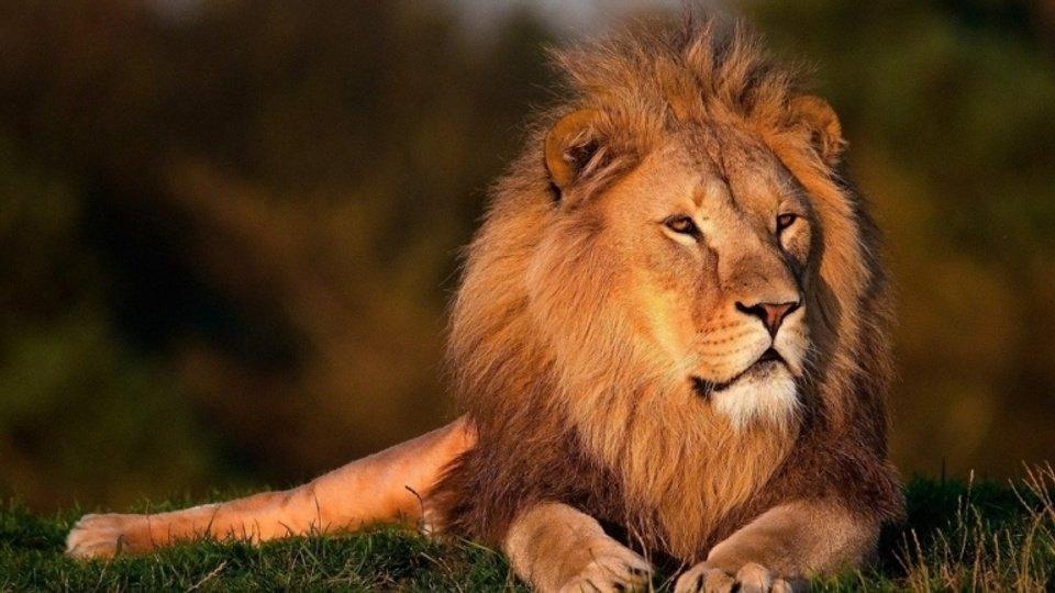 LionsAfriqueDuSud_Odysway.jpg