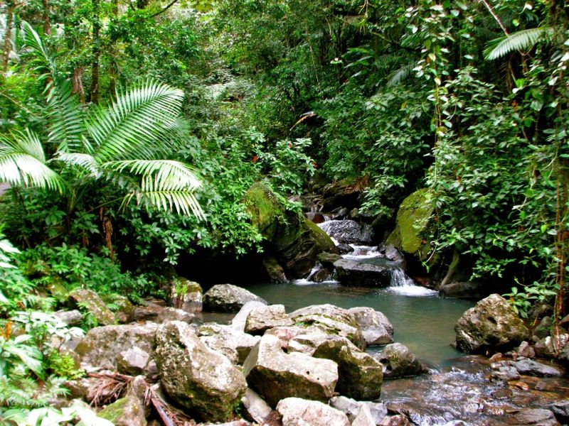 El Yunque is one of the Best Places to Visit in Puerto Rico