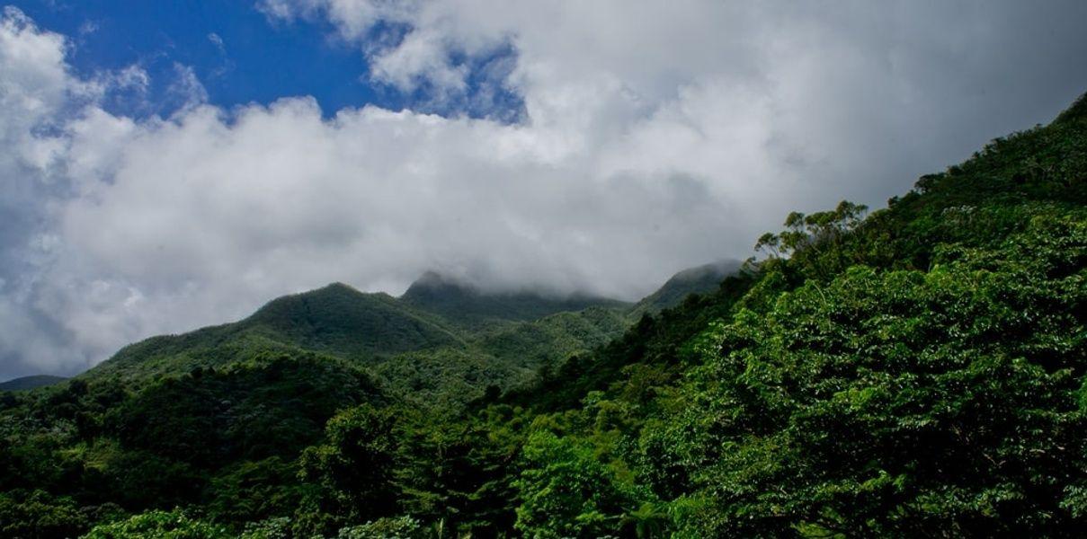 El Yunque is Puerto Rico's rainforest