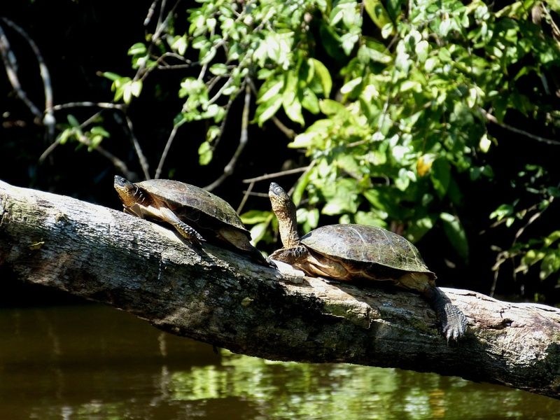 Tortuguero is one of the most beautiful places to visit in Costa Rica