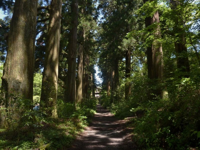 Traveling on the Old Tokaido Road is one of the things to do in Hakone Japan
