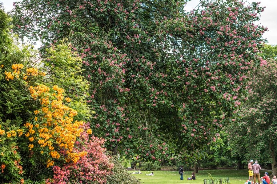 Relaxing at the Belfast Botanic Gardens is a great thing to do in Belfast Ireland