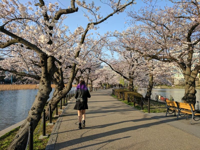 What to do in 3 days in Tokyo? Take a stroll in Ueno Park!
