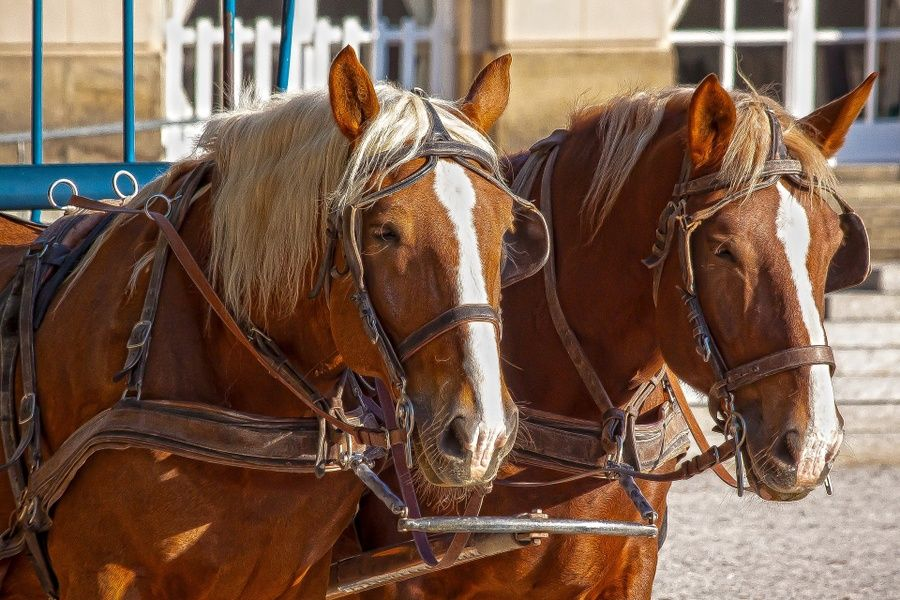 Seeing the city by horse-drawn carriage is a great thing to do in Limerick