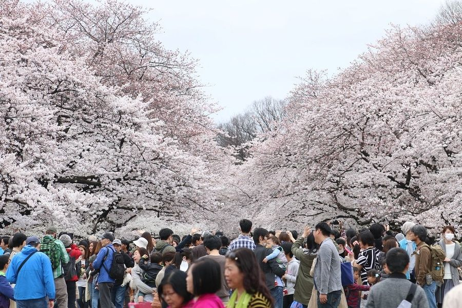Ueno Park Must Do in Tokyo