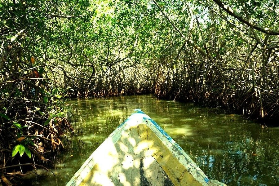 Mangrove Swamps Colombia