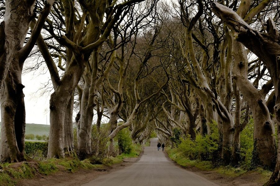 The Dark Hedges are an Ireland point of interest
