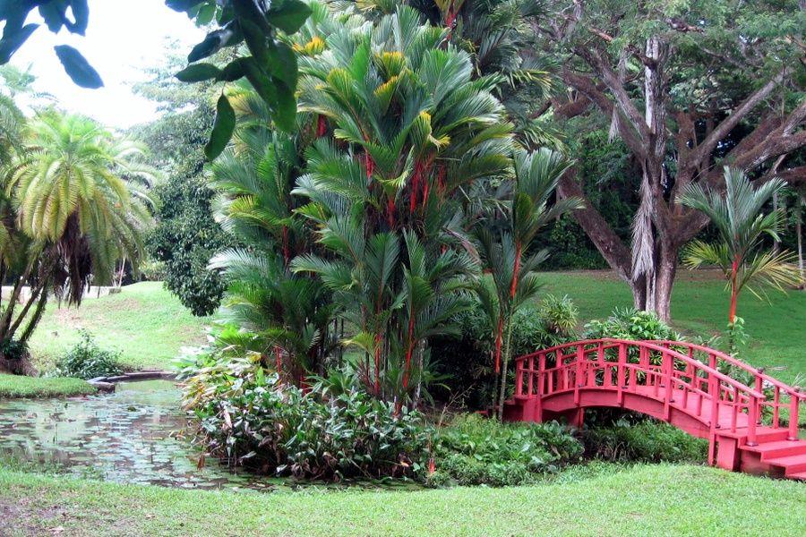 Rio Piedras Botanical Garden Places to Go in Puerto Rico