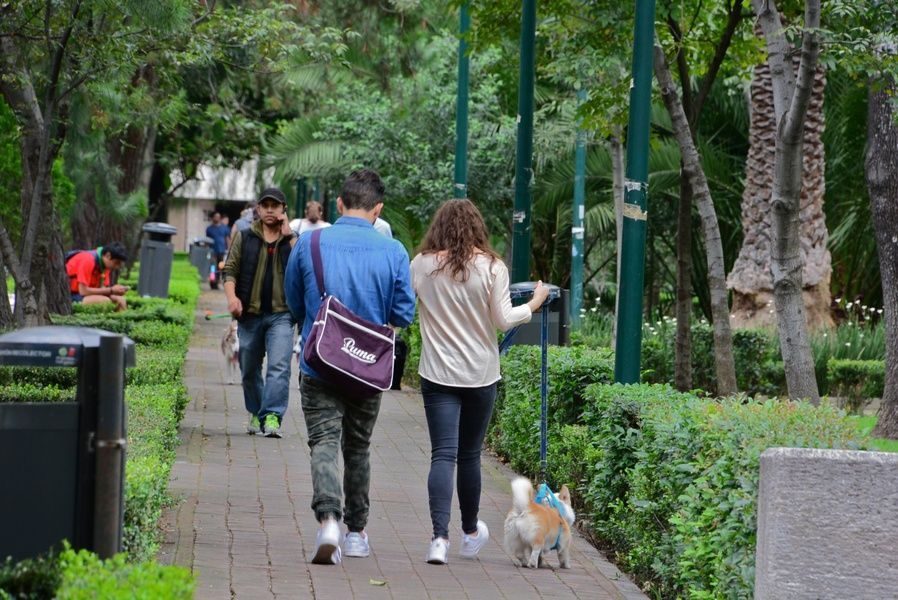 Polanco is one of the best neighborhoods to stay in Mexico City