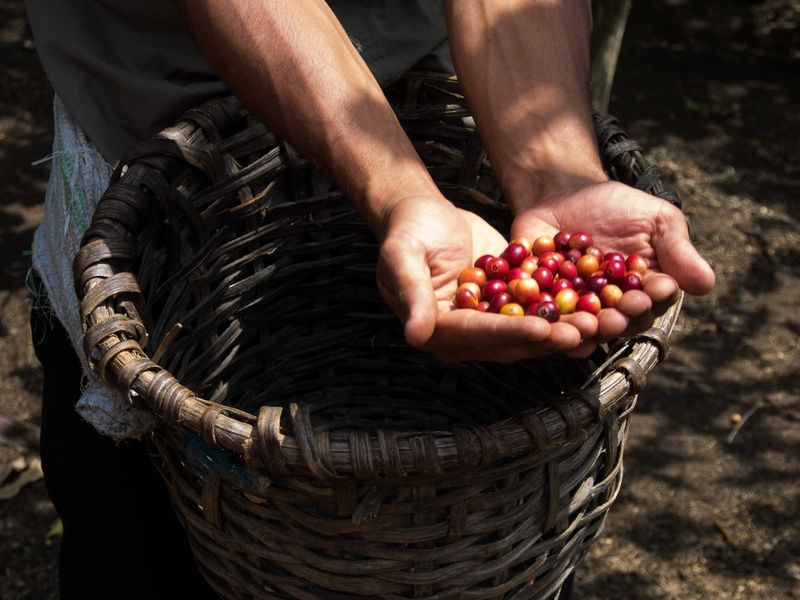 Where to stay in Costa Rica for incredible coffee? The Central Valley