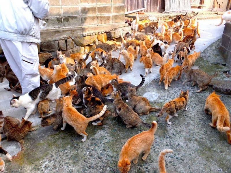 Tashirojima Cat Island in Japan