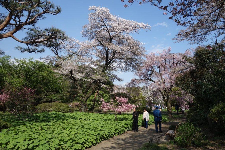 Beautiful Shinjuku Gyoen National Garden is a wonderful Tokyo point of interest