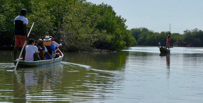 Mangrove Swamps La Boquilla Colombia