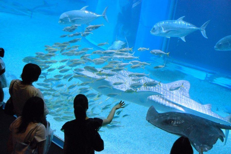 Osaka Aquarium in Japan