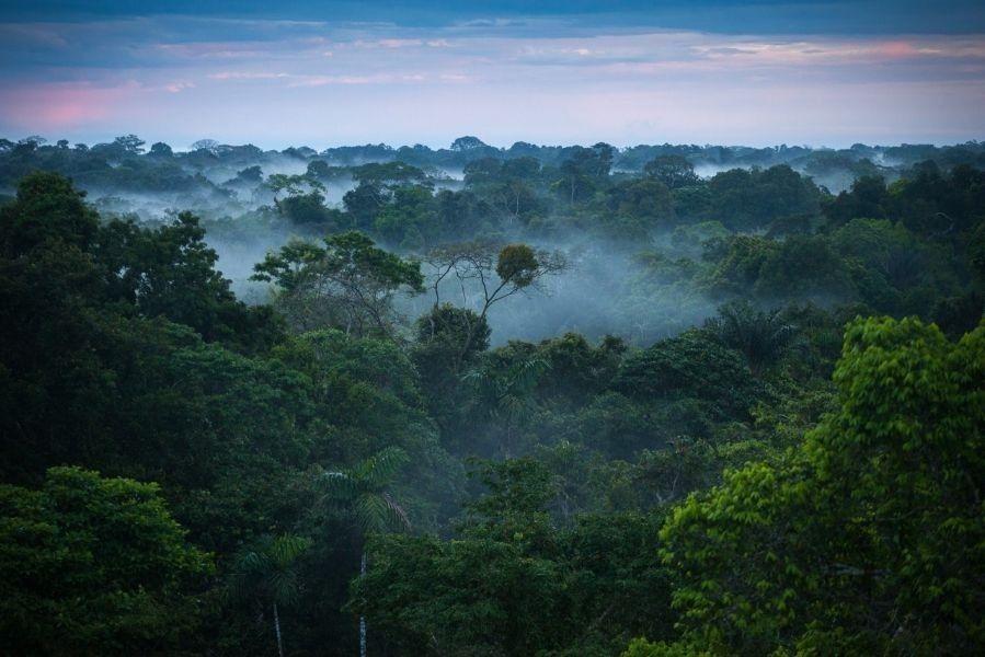Amazon Jungle Colombia
