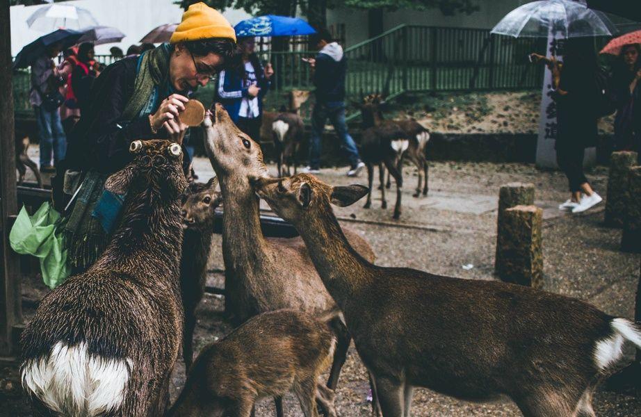 Nara Park deers