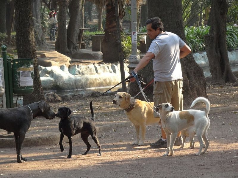 A fun thing to do in Mexico City is dog watch in Parque Mexico