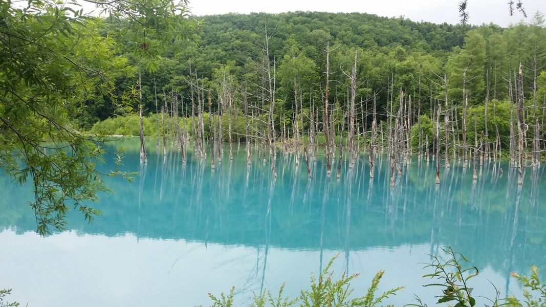 Hokkaido is one of the best places to visit in Japan