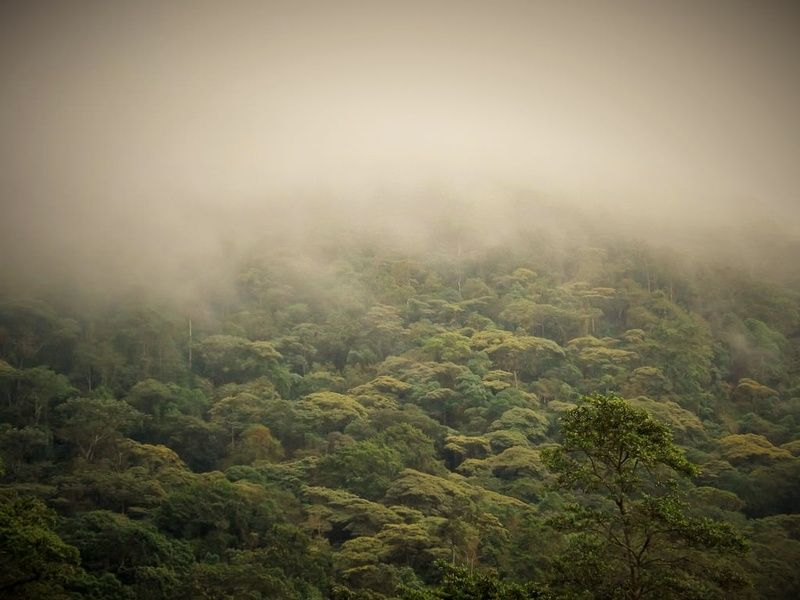 Cloud forest is one of the best Colombia tourist attractions