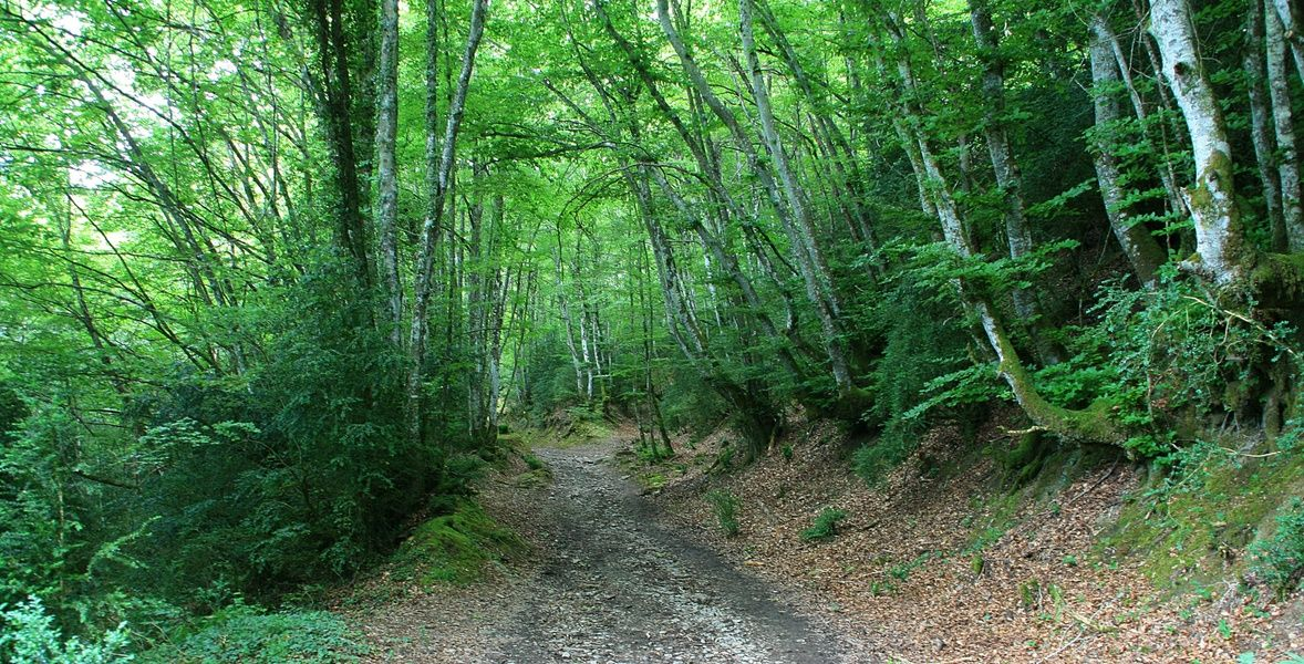 Camino de Santiago is an awesome place to visit in Spain