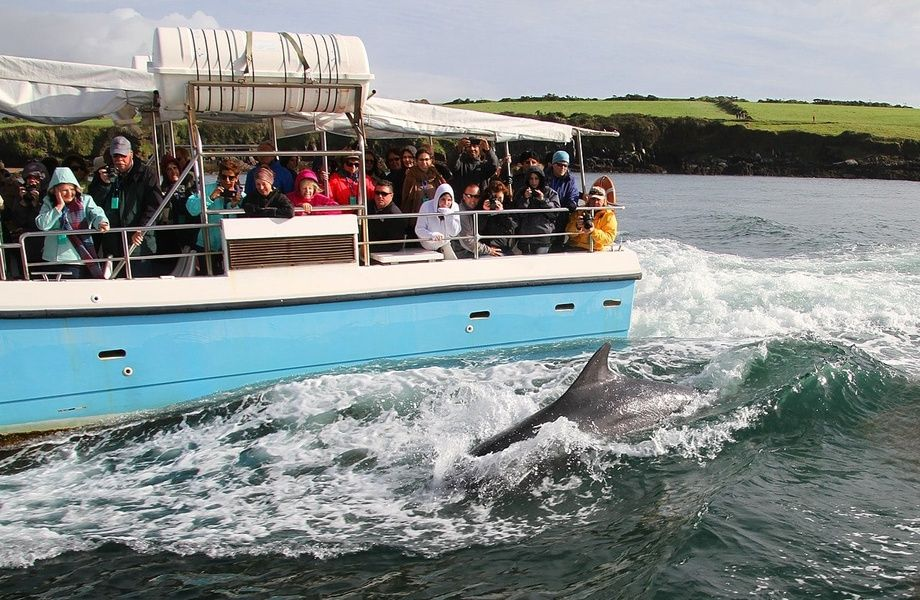 Looking for Fungie the dolphin is one of the best things to do in Dingle Ireland
