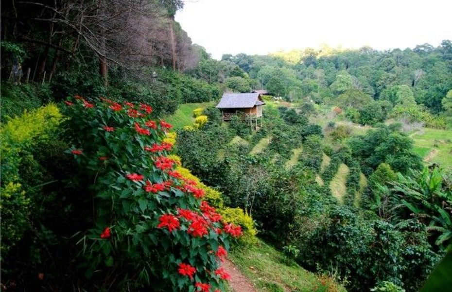 Crawling through the coffee farms is one of many Puerto Rico tours