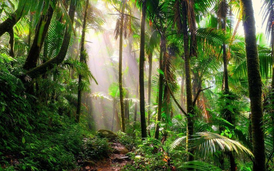 El Yunque Cheap Trips To Puerto Rico