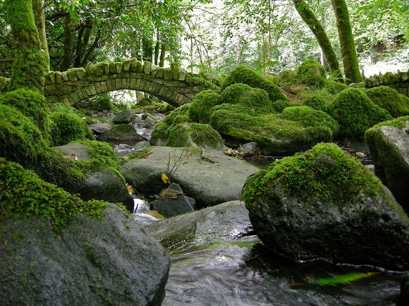 Finding serenity at Kilfane Glen is an amazing thing to do in Kilkenny Ireland