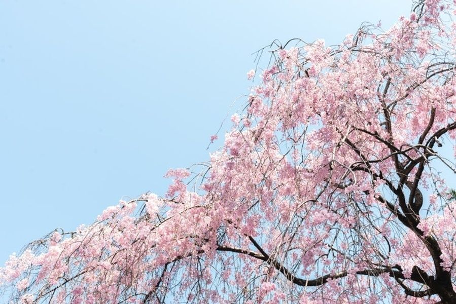 Seeing the gorgeous Shinjuku Gyoen National Garden is one of the top 10 things to do in Tokyo