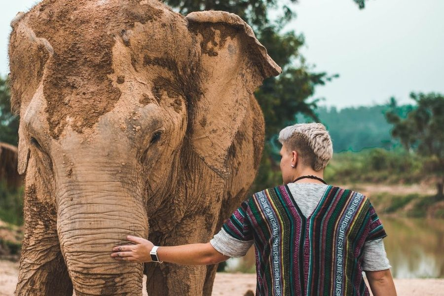 Befriending elephants is one of the best things to do in Thailand