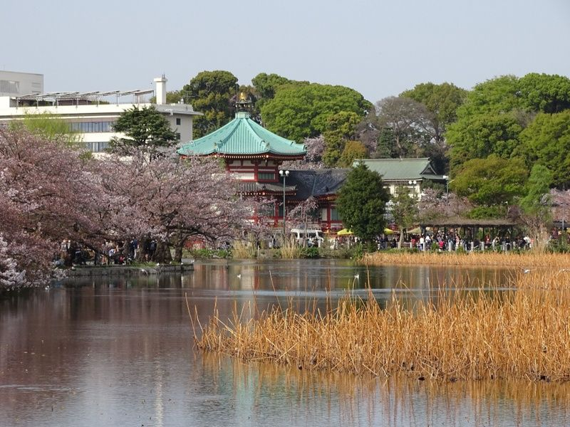 Enjoying the beauty of Ueno Park is one of the top 10 things to do in Tokyo