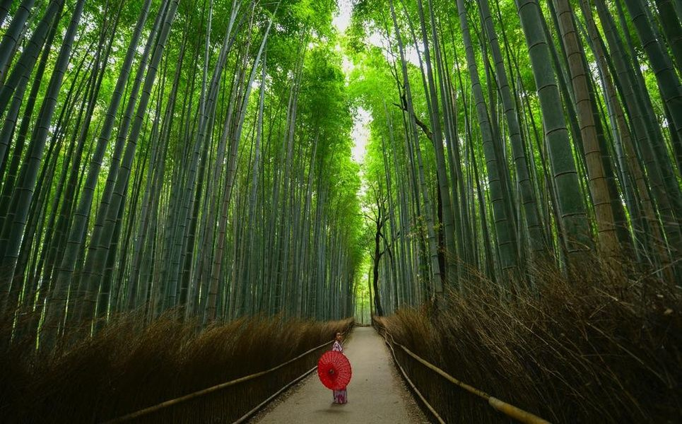 Bamboo Forest Kyoto Must Do Japan