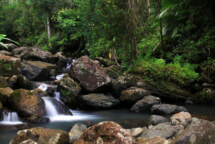 El Yunque Places to Visit in Puerto Rico