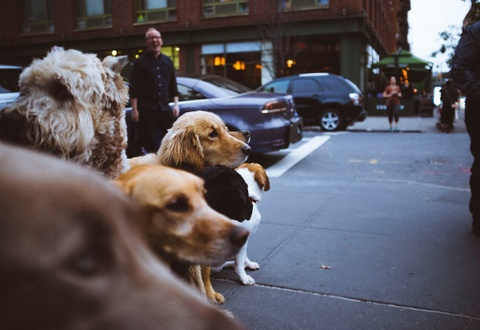 The Dog Lover's Guide to Seattle, Seattle, WA