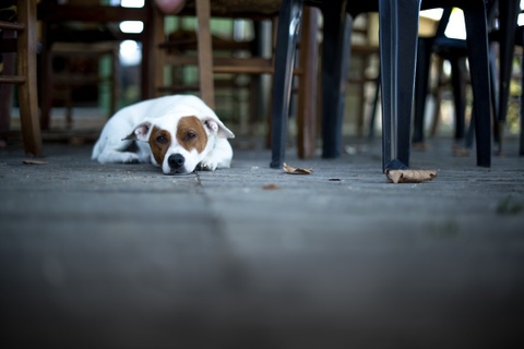 Dog-Friendly Restaurants in San Francisco, San Francisco, CA