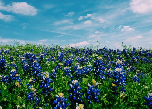 Image of 9 Most Instagram-Worthy Spots in Dallas