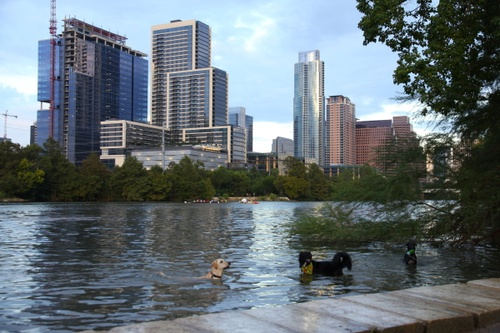 Image of 4 Austin Places Your Dog Will Love