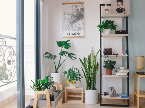 Image of The 7 Best Houseplants for Apartments