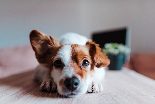 Image of Your Pet-Friendly Guide to Nashville