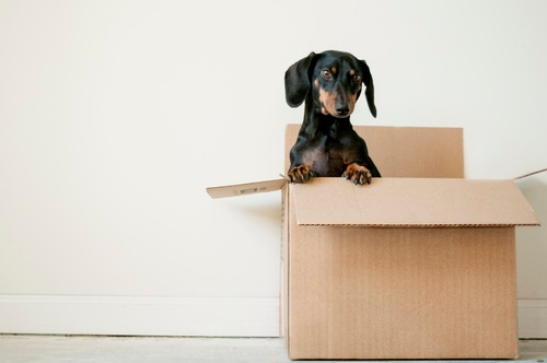 Image of Cheap Moving Hacks: 6 Tips to Save Money With Free Boxes and More