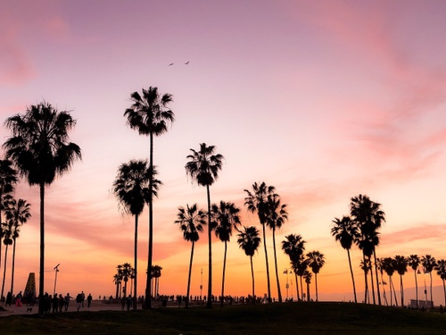 Image of Why Living in Los Angeles Beats New York City: Where Do I Start?