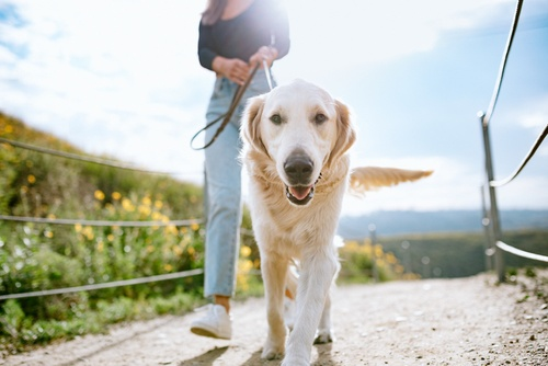 Image of 4 Dog-Friendly Spots in San Francisco
