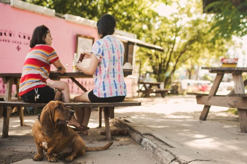 Image of Your Pet-Friendly Guide to Austin