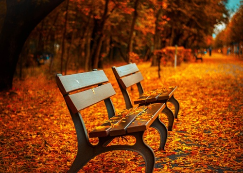 Image of 4 Best Places to See Fall Foliage in Boston
