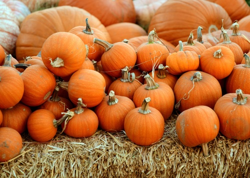 Image of 5 Places to Get into the Fall Spirit in San Diego