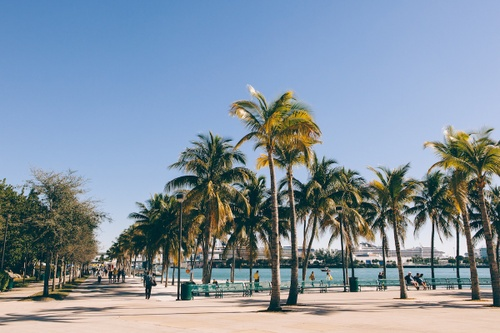 Image of Best Things to Do in Miami This Winter