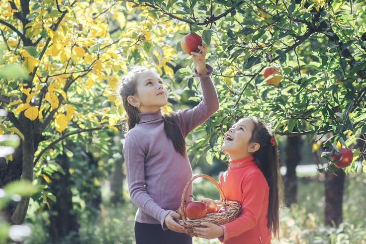 Two girls picking apples