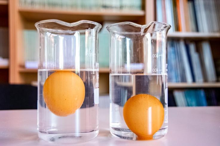 eggs in glass beakers