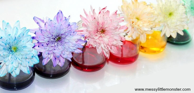 colored flowers in a vase